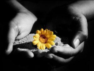 fiore in mano