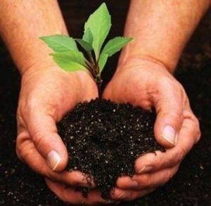 Il silenzio della preghiera è come un seme piantato
